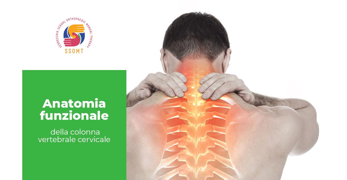 anatomia colonna vertebrale cervicale